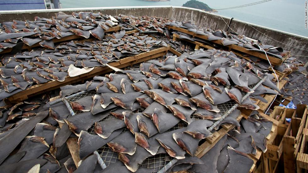 Stock d'ailerons de requin