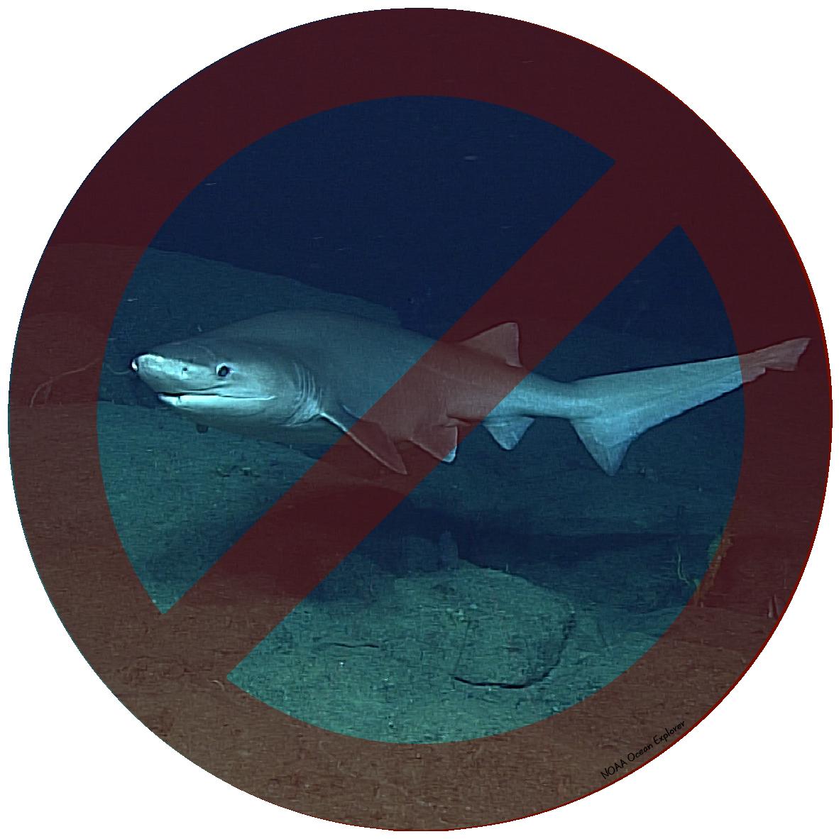 Requin griset