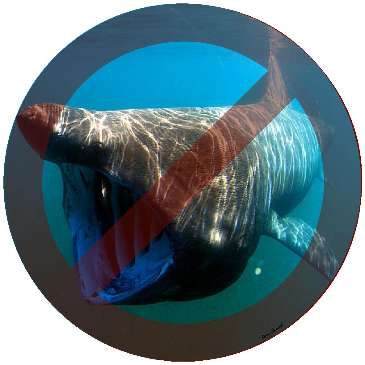 Requin pelerin
