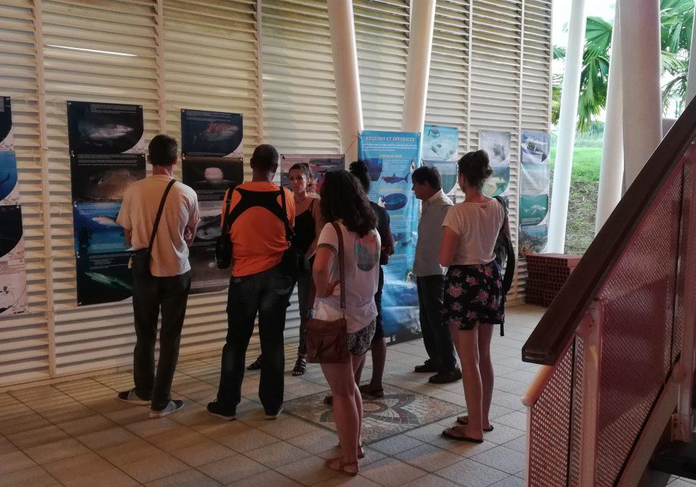 Exposition sur les requins et les raies, Martinique